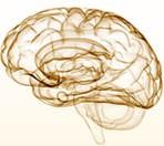 Cerebro e Encefalo contorno a mão, desenho ilustrativo