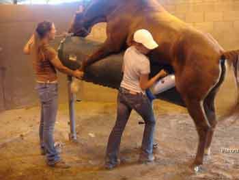 veterinario-inseminacao-artificial-cavalo-pior-trabalho-emprego