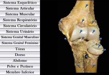 Atlas de Anatomia GRATIS em PORTUGUES pela Internet - Fotografia de peças de dissecção