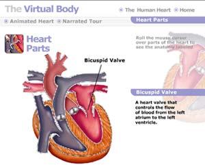 Atlas de anatomia para estudar pelo PC de graça