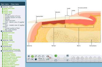 DirectAnatomy - Atlas de anatomia interativo para estudar pelo computador com anatomia patológica e fisiopatologia