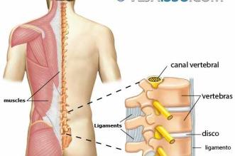 Conhecer a anatomia da coluna vertebral e dos nervos que emergem da coluna é fundamental para identificar as causas de ciatalgia