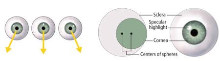 Exemplos de olhos com reflexos corneanos da luz apontando para lugares diferentes